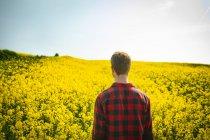 Vista traseira do homem em pé no campo de mostarda em um dia ensolarado — Fotografia de Stock