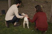 Пара кормящих коз на ранчо — стоковое фото