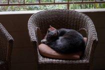 Расслабление в кресле дома — стоковое фото