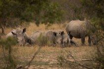 Крах сонячний день носоріг в сафарі-парку — стокове фото