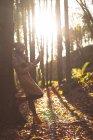 Жінка в теплим одягом, використання мобільного телефону у лісі — стокове фото