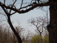 Scimmia seduta su albero nudo nel parco safari — Foto stock