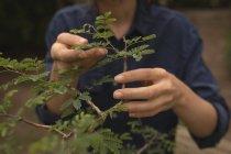 Frau kontrolliert Pflanze im Garten — Stockfoto