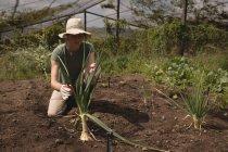 Agricultor colocando planta en el suelo en invernadero - foto de stock