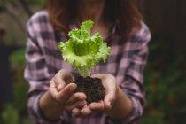 Sezione centrale della donna che tiene la pianta in mano — Foto stock