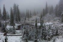 Bella vista sugli alberi e fiume in una giornata nevosa — Foto stock
