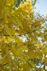Ramas con hojas de otoño contra el cielo - foto de stock