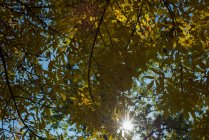 Luz del sol pasa a través de árboles verdes - foto de stock