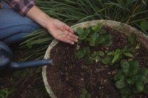 Mani di donna che tiene semi in giardino — Foto stock