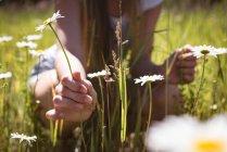 Девушка трогает цветы в зеленом поле на солнце . — стоковое фото