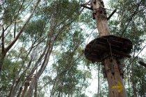 Vista de ángulo bajo de tirolina, punto de partida en el bosque - foto de stock