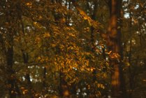 Yellowish orange autumn leaves on branch of tree during daytime — Stock Photo