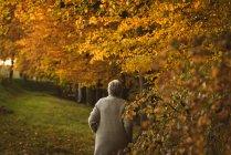Visão traseira da mulher idosa vestindo casaco andando no parque ao amanhecer — Fotografia de Stock