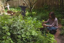 Woman examining pot plant in garden — Stock Photo
