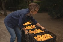 Woman lifting crate filled with oranges in the farm — Stock Photo