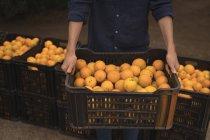 Seção média de mulher segurando caixa preenchida com laranja na fazenda — Fotografia de Stock