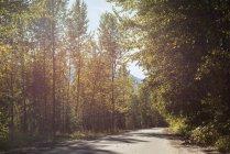 Дорога проходить через ліс у сонячний день — стокове фото
