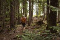 Задній вид зрілої жінки з Піші прогулянки поляків, прогулянки в ліс — стокове фото
