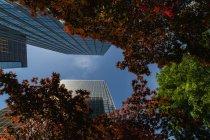 Inquadratura dal basso di grattacieli e fogliame rosso in città. — Foto stock