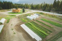 Aerial of crop cultivation and greenhouse in the farm — Stock Photo