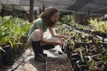 Female farmer looking at plant tag in greenhouse — Stock Photo