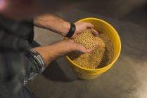 Людина, розглядаючи зерно у мішку на заводі — стокове фото