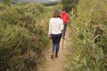 Vue arrière du couple marche avec le bâton près de campagne — Photo de stock