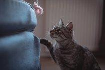 Любопытный домашний кот смотрит на комок шерсти дома — стоковое фото