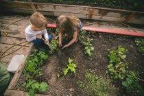 Двое маленьких детей сеют семена в теплице — стоковое фото