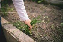 Close-up of boy pulling grass weed at greenhouse — Stock Photo