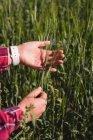 Donna che tiene i raccolti nel campo — Foto stock
