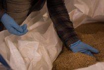 Media sección de trabajadora, comprobación de granos en almacén - foto de stock