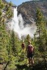 Visão traseira do casal caminhando na floresta nas montanhas — Fotografia de Stock