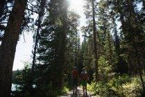 Задній вид пара прогулянки з рука об руку в лісі — стокове фото