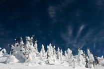 Alberi innevati durante l'inverno — Foto stock
