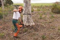 Дроворуб різання дерева в лісі в сільській місцевості — стокове фото