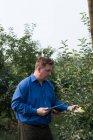 Человек с цифровым планшетом исследует растения в теплице — стоковое фото