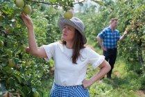 Mujer y hombre examinando frutas en la granja - foto de stock