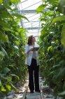 Cientista feminina com tablet digital olhando para plantas em estufa — Fotografia de Stock