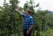 Techniker überprüft Früchte an Pflanzen im Gewächshaus — Stockfoto