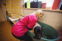 Woman bathing a dog in bathtub at dog care center — Stock Photo