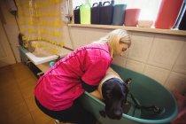 Женщина купает собаку в ванной в собачьем центре — стоковое фото
