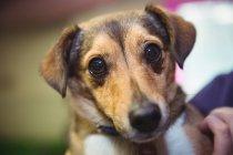 Крупный план собаки в собачьем центре — стоковое фото