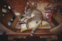 Табби-кот отдыхает на деревянном стуле с декоративными подушками — стоковое фото