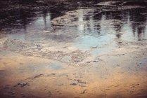 Superficie de agua del río congelada en bosques en invierno - foto de stock