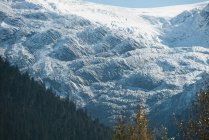 Majestic view of beautiful forest and snowy mountain range — Stock Photo