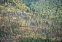 Majestätischer Blick auf Bäume im dichten Wald — Stockfoto