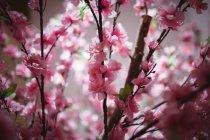 Close-up de ramo com flores cor de rosa dentro de casa — Fotografia de Stock