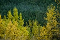 Scenic view of beautiful trees in seasonal forest — Stock Photo