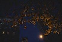 Vista de ángulo bajo de edificios de oficinas y árboles otoñales por la noche - foto de stock